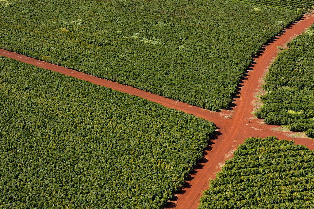 Coffee Plantation in Hawaii