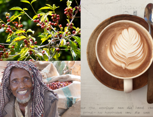 From the tree to your cup: The long journey of your coffee
