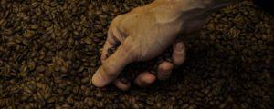 Hand des Röstmeisters prüft die Kaffeequalität