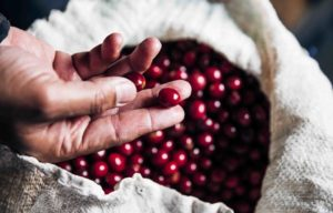 direct coffee switzerland biodegradable