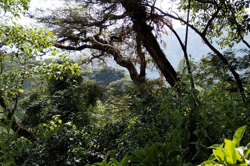 Besser als bio weil im natürlichen Wald gewachsen